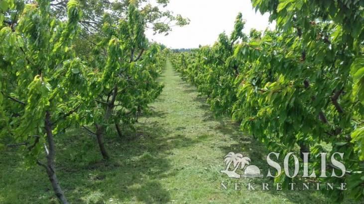 Investiranje u poljoprivredno zemljište