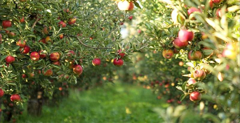 Zašto je dobro ulagati novac u voćnjak